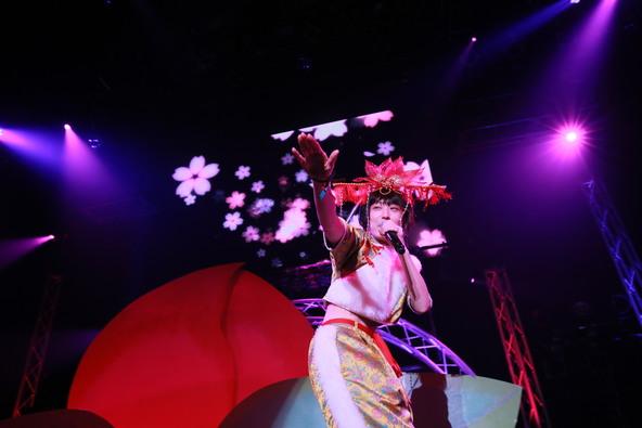 1月30日(土)@東京・赤坂BLITZ(水曜日のカンパネラ) (okmusic UP's)