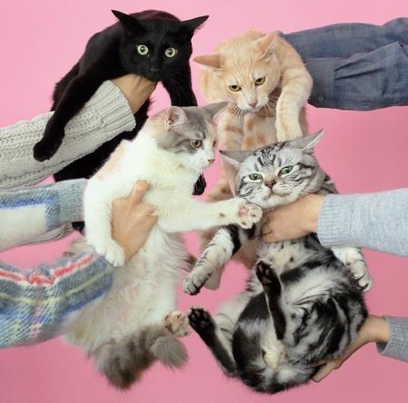 アルバム『猫とアレルギー』 (okmusic UP's)