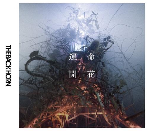 アルバム『運命開花』【初回限定盤】(CD+DVD) (okmusic UP's)