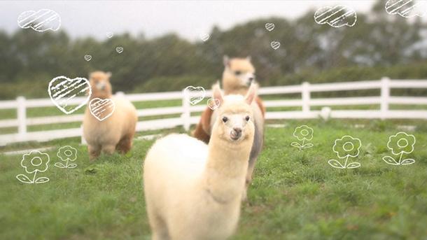 「牧場物語 3つの里の大切な友だち」