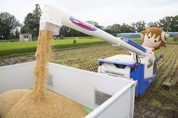 タボくんが湖南農高生と近江米新品種「みずかがみ」の稲刈り