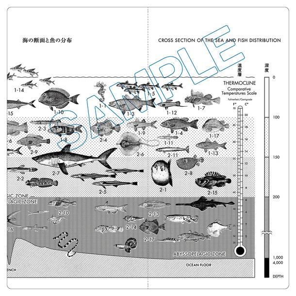 アルバム『魚図鑑』オリジナルチケットホルダー⾒本